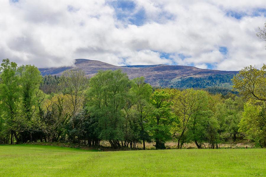 View of Mangerton from Friars Glen